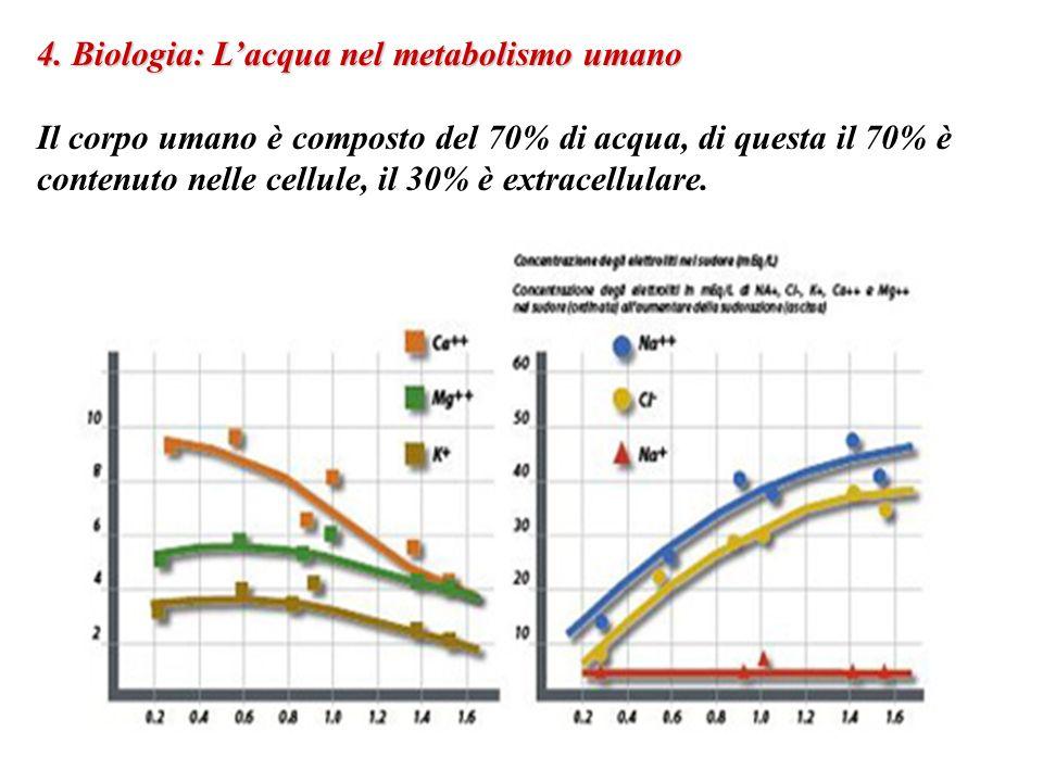 4. Biologia: Lacqua nel metabolismo umano Il corpo umano è composto del 70% di acqua, di questa il 70% è contenuto nelle cellule, il 30% è extracellul