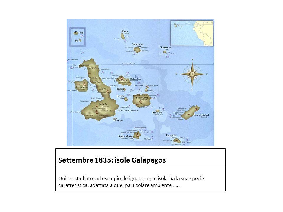 Settembre 1835: isole Galapagos Qui ho studiato, ad esempio, le iguane: ogni isola ha la sua specie caratteristica, adattata a quel particolare ambien