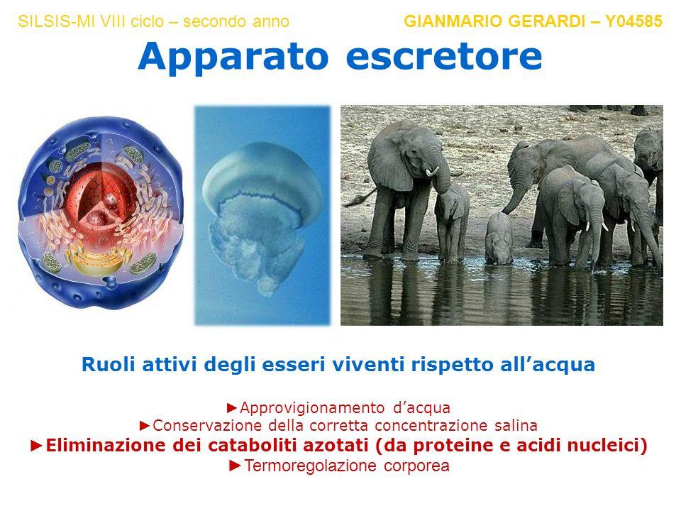 Ruoli attivi degli esseri viventi rispetto allacqua Approvigionamento dacqua Conservazione della corretta concentrazione salina Eliminazione dei catab