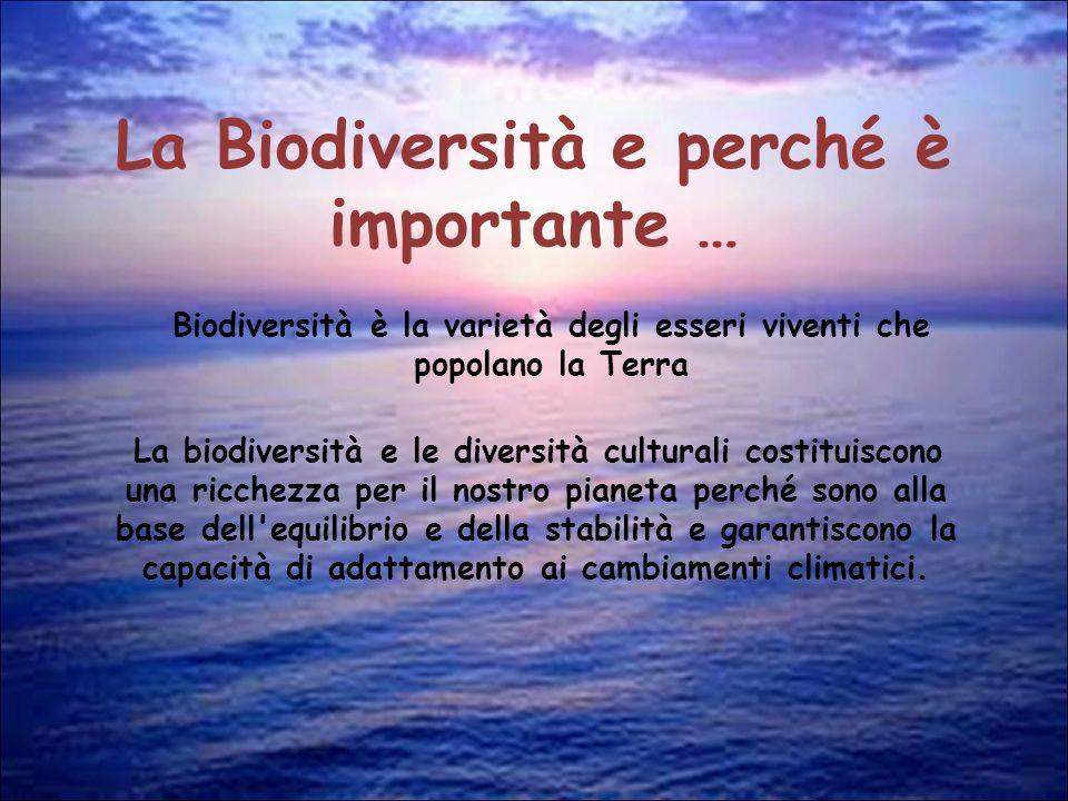 La Posidonia Molto spesso viene erroneamente chiamata alga ma in realtà la Posidonia oceanica è una pianta a tutti gli effetti dato che ha radici, fusto (detto rizoma) ed è considerata il polmone del Mediterraneo.