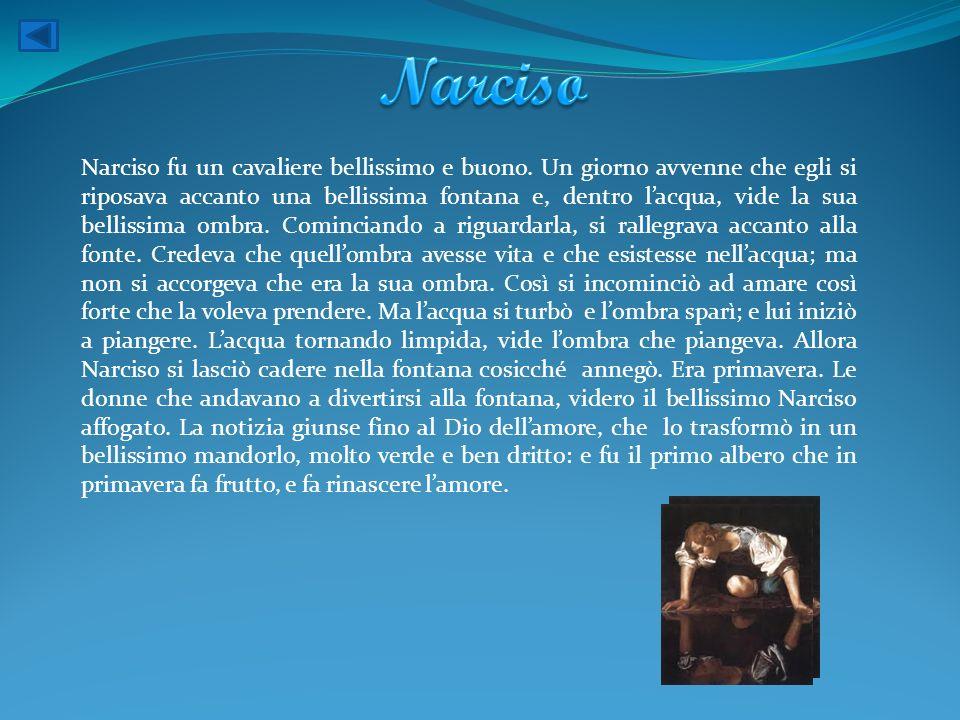 Narciso fu un cavaliere bellissimo e buono. Un giorno avvenne che egli si riposava accanto una bellissima fontana e, dentro lacqua, vide la sua bellis