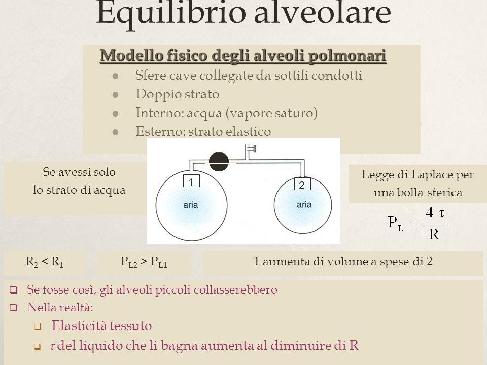 26 Equilibrio alveolare Modello fisico degli alveoli polmonari Modello fisico degli alveoli polmonari Sfere cave collegate da sottili condotti Doppio strato Interno: acqua (vapore saturo) Esterno: strato elastico Se avessi solo lo strato di acqua Legge di Laplace per una bolla sferica R 2 < R 1 P L2 > P L1 1 aumenta di volume a spese di 2 1 2 Se fosse così, gli alveoli piccoli collasserebbero Nella realtà: Elasticità tessuto del liquido che li bagna aumenta al diminuire di R