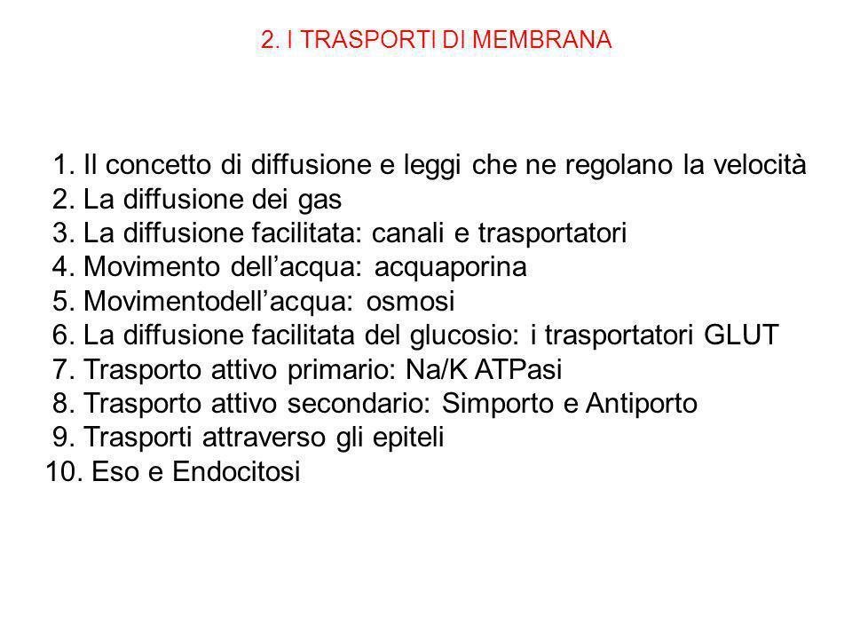 1. Il concetto di diffusione e leggi che ne regolano la velocità 2. La diffusione dei gas 3. La diffusione facilitata: canali e trasportatori 4. Movim