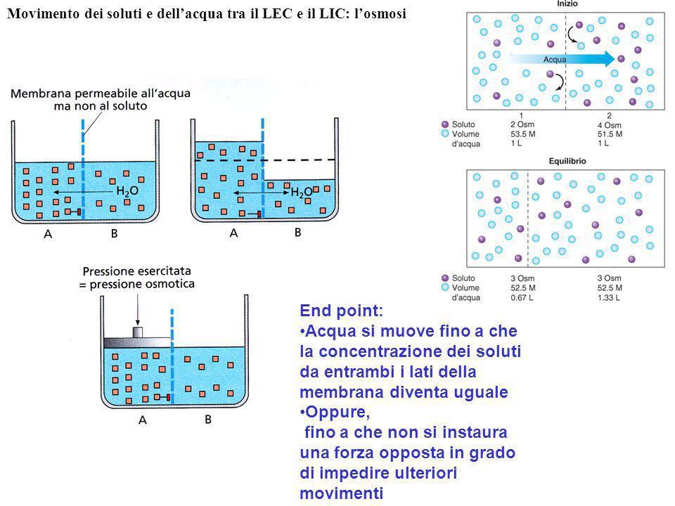 End point: Acqua si muove fino a che la concentrazione dei soluti da entrambi i lati della membrana diventa uguale Oppure, fino a che non si instaura
