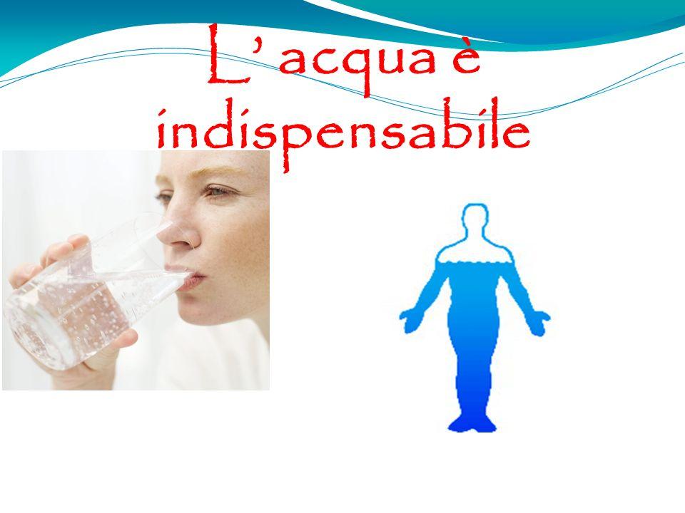 L acqua è indispensabile