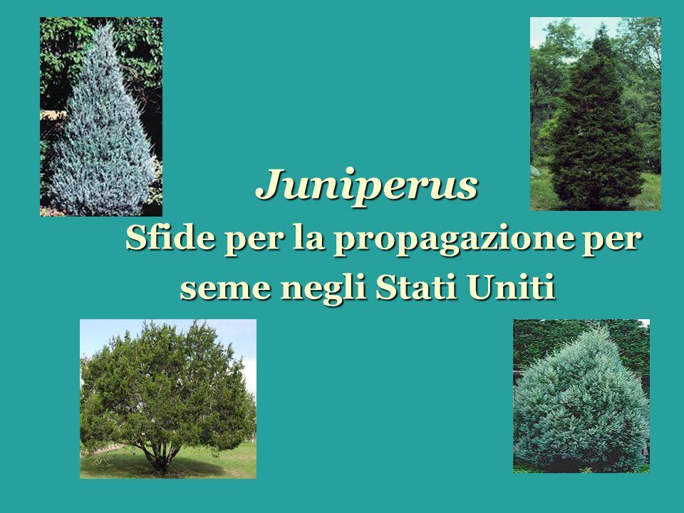 United States Distribution of Juniperus J.pinchotii J.
