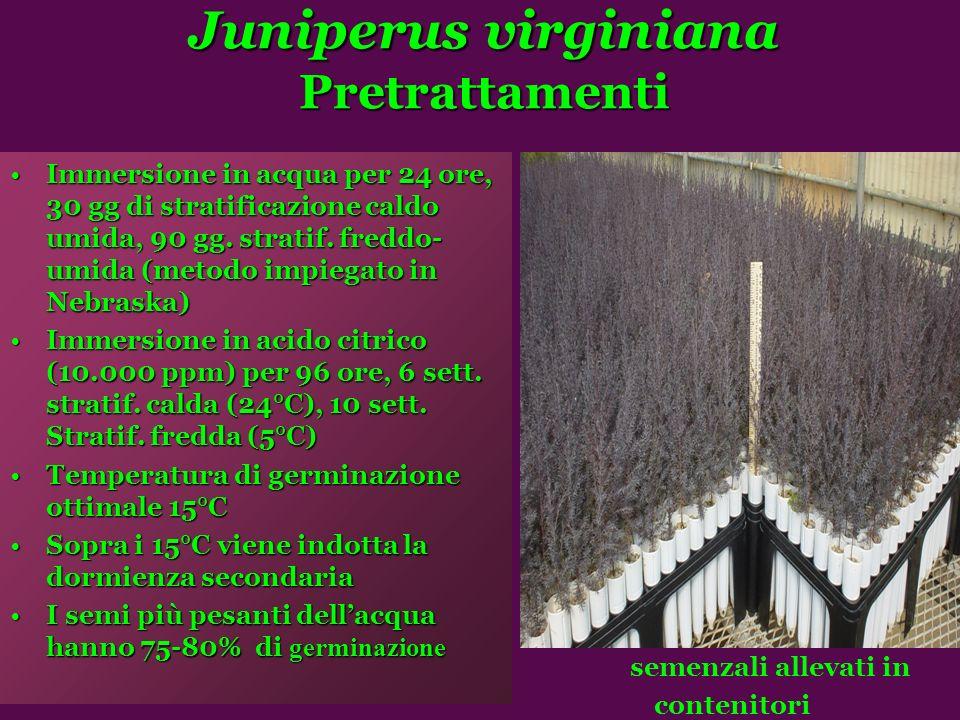 Juniperus virginiana Pretrattamenti Immersione in acqua per 24 ore, 30 gg di stratificazione caldo umida, 90 gg.
