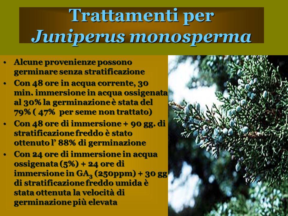 Trattamenti per Juniperus monosperma Alcune provenienze possono germinare senza stratificazioneAlcune provenienze possono germinare senza stratificazione Con 48 ore in acqua corrente, 30 min.