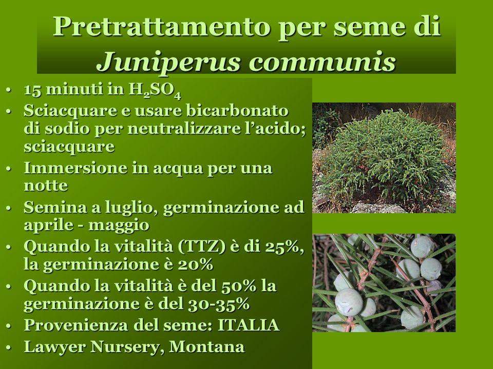 Pretrattamento per seme di Juniperus communis 15 minuti in H 2 SO 415 minuti in H 2 SO 4 Sciacquare e usare bicarbonato di sodio per neutralizzare lacido; sciacquareSciacquare e usare bicarbonato di sodio per neutralizzare lacido; sciacquare Immersione in acqua per una notteImmersione in acqua per una notte Semina a luglio, germinazione ad aprile - maggioSemina a luglio, germinazione ad aprile - maggio Quando la vitalità (TTZ) è di 25%, la germinazione è 20%Quando la vitalità (TTZ) è di 25%, la germinazione è 20% Quando la vitalità è del 50% la germinazione è del 30-35%Quando la vitalità è del 50% la germinazione è del 30-35% Provenienza del seme: ITALIAProvenienza del seme: ITALIA Lawyer Nursery, MontanaLawyer Nursery, Montana