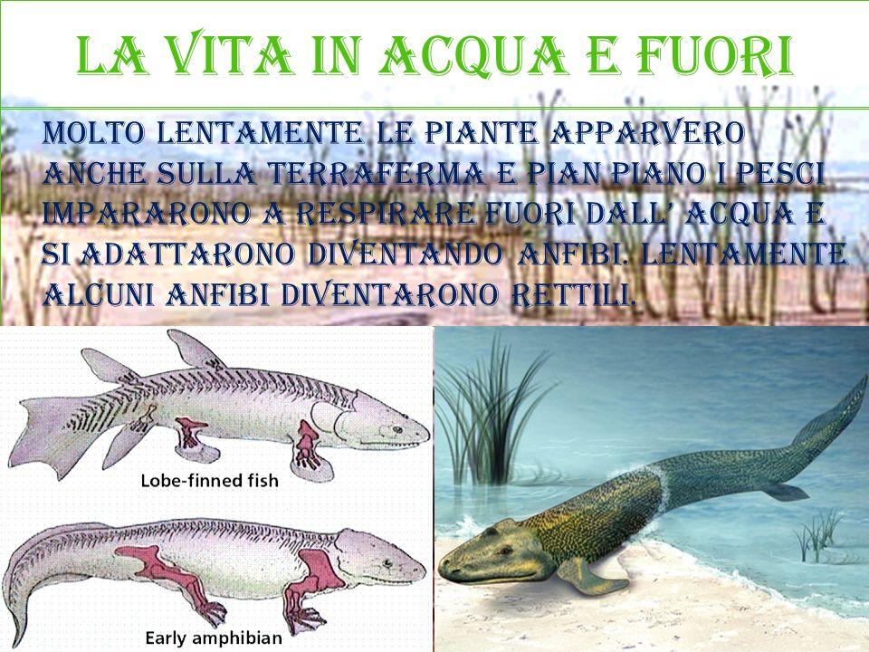 La vita in acqua e fuori Molto lentamente le piante apparvero anche sulla terraferma e pian piano i pesci impararono a respirare fuori dall acqua e si