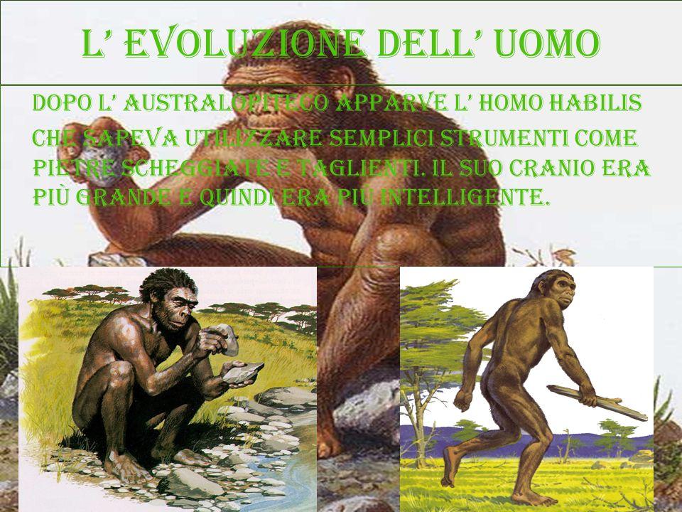 L evoluzione dell uomo Dopo l australopiteco apparve l homo habilis Che sapeva utilizzare semplici strumenti come pietre scheggiate e taglienti. Il su