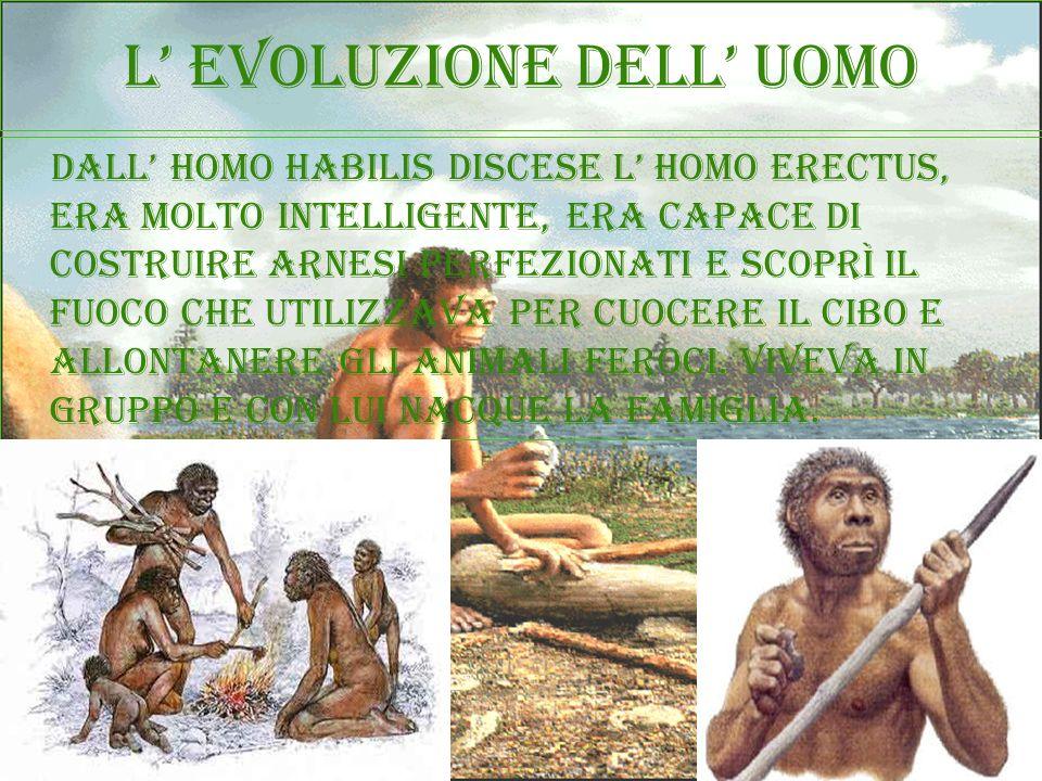 L evoluzione dell uomo dall homo habilis discese l homo erectus, era molto intelligente, era capace di costruire arnesi perfezionati e scoprì il fuoco