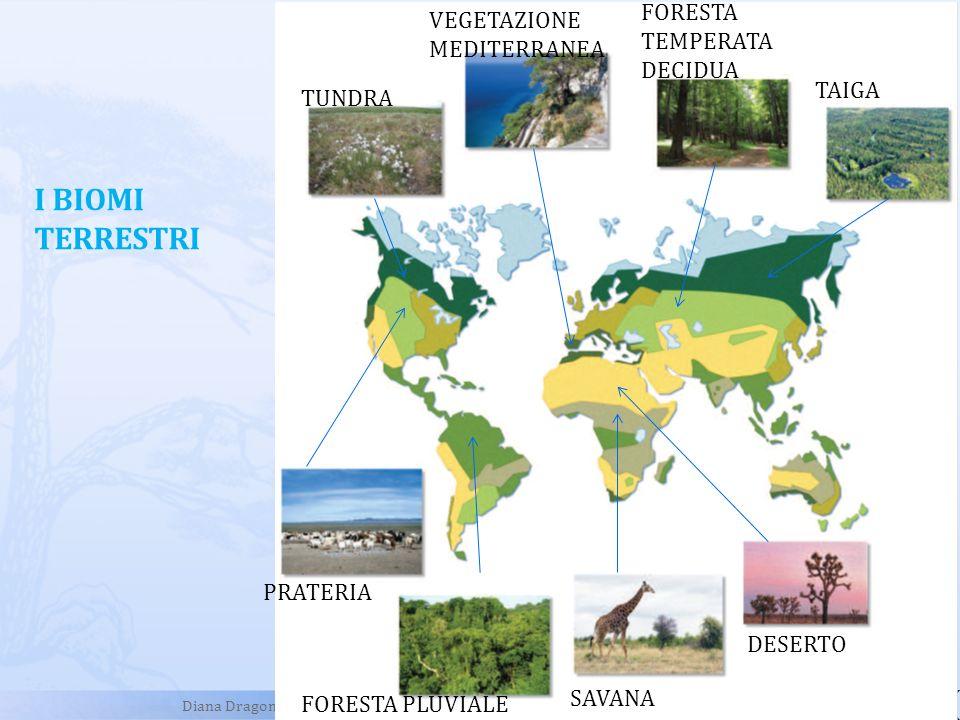 Diana Dragoni I BIOMI TERRESTRI TUNDRA VEGETAZIONE MEDITERRANEA FORESTA TEMPERATA DECIDUA TAIGA PRATERIA FORESTA PLUVIALE SAVANA DESERTO