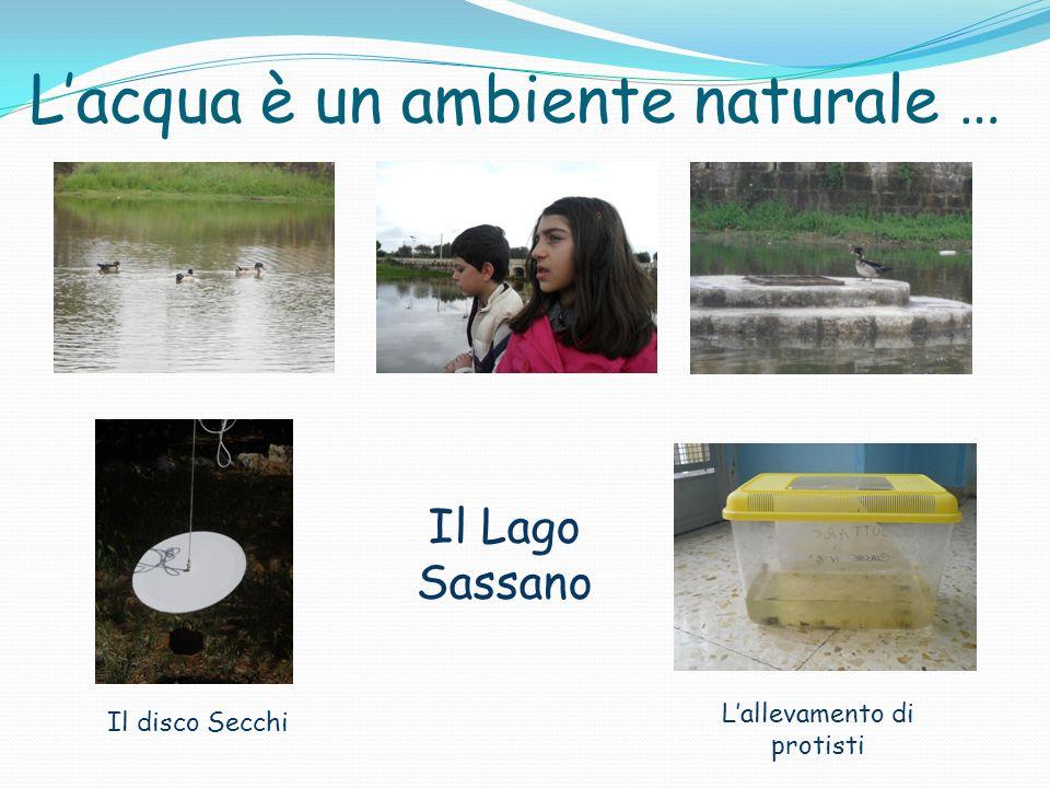 Lacqua è un ambiente naturale … Il Lago Sassano Lallevamento di protisti Il disco Secchi