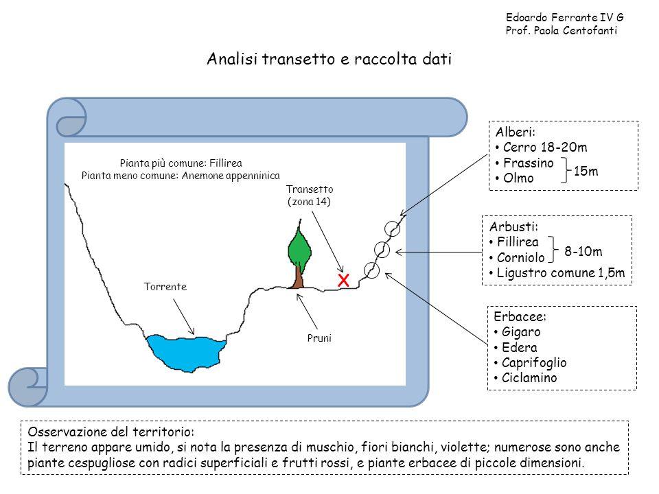 Analisi transetto e raccolta dati Edoardo Ferrante IV G Prof. Paola Centofanti Torrente Pruni Transetto (zona 14) X Alberi: Cerro 18-20m Frassino Olmo