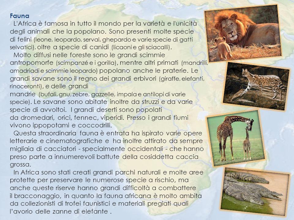 Fauna L Africa è famosa in tutto il mondo per la varietà e l unicità degli animali che la popolano.