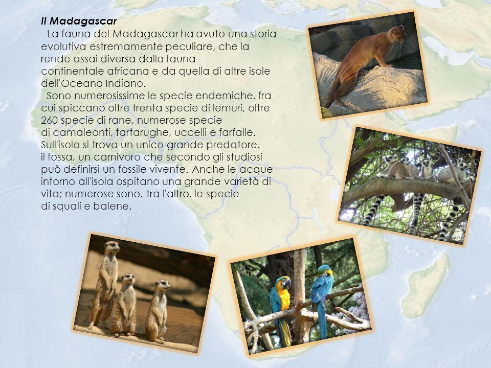 Il Madagascar La fauna del Madagascar ha avuto una storia evolutiva estremamente peculiare, che la rende assai diversa dalla fauna continentale africana e da quella di altre isole dell Oceano Indiano.