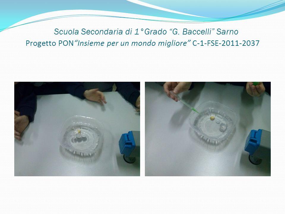 Scuola Secondaria di 1°Grado G. Baccelli Sarno Progetto PONInsieme per un mondo migliore C-1-FSE-2011-2037