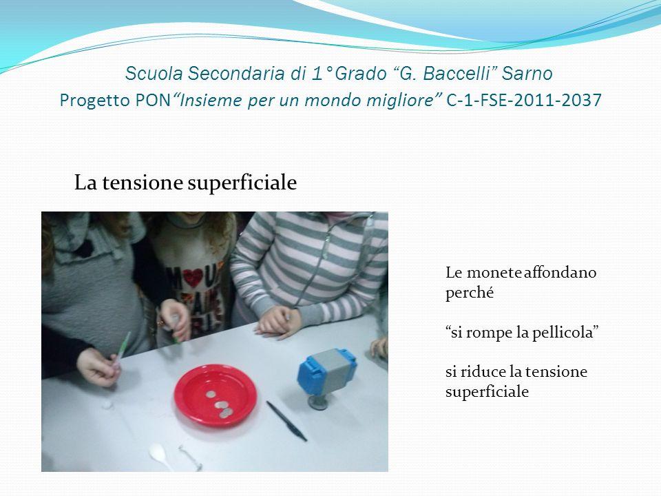 Scuola Secondaria di 1°Grado G. Baccelli Sarno Progetto PONInsieme per un mondo migliore C-1-FSE-2011-2037 La tensione superficiale Le monete affondan