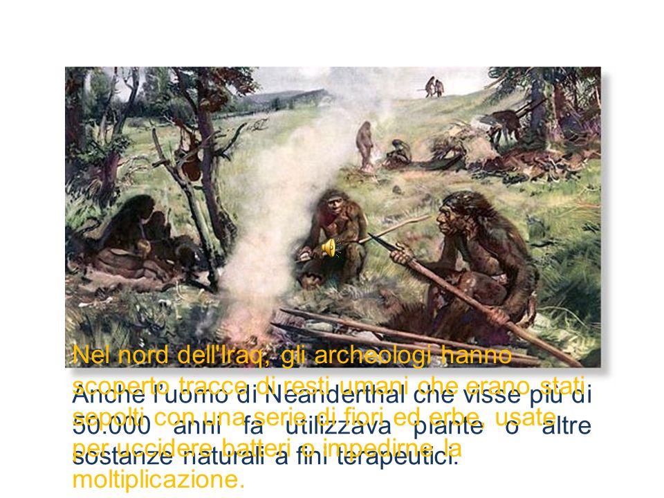 Anche luomo di Neanderthal che visse più di 50.000 anni fa utilizzava piante o altre sostanze naturali a fini terapeutici. Nel nord dell'Iraq, gli arc
