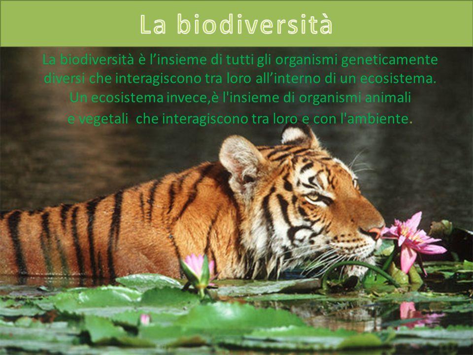 La biodiversità è linsieme di tutti gli organismi geneticamente diversi che interagiscono tra loro allinterno di un ecosistema. Un ecosistema invece,è