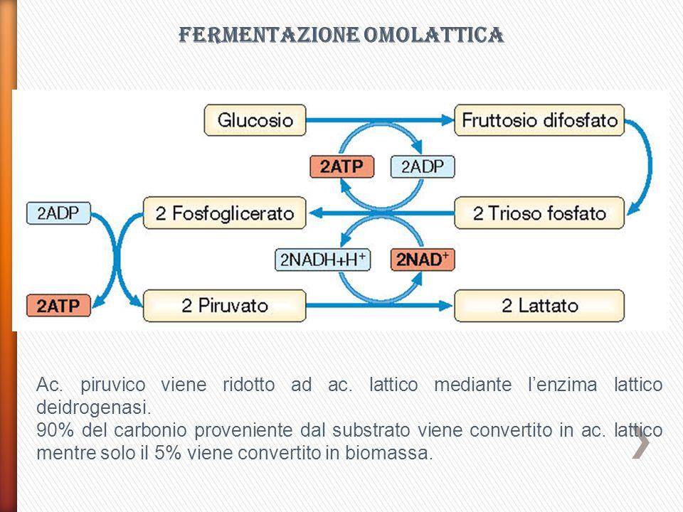 Attività metaboliche dei batteri specifici dello yogurt Catabolismo del lattosio: trasportato allinterno della cellula mediante specifiche permeasi e scisso in glucosio e galattosio dalla β-galattosidasi.
