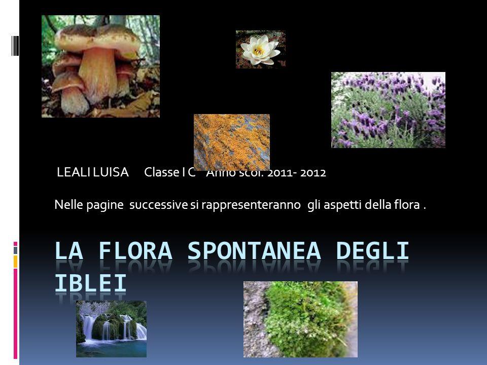 LEALI LUISA Classe I C Anno scol. 2011- 2012 Nelle pagine successive si rappresenteranno gli aspetti della flora.