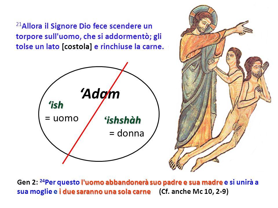 21 Allora il Signore Dio fece scendere un torpore sull uomo, che si addormentò; gli tolse un lato [costola] e rinchiuse la carne.