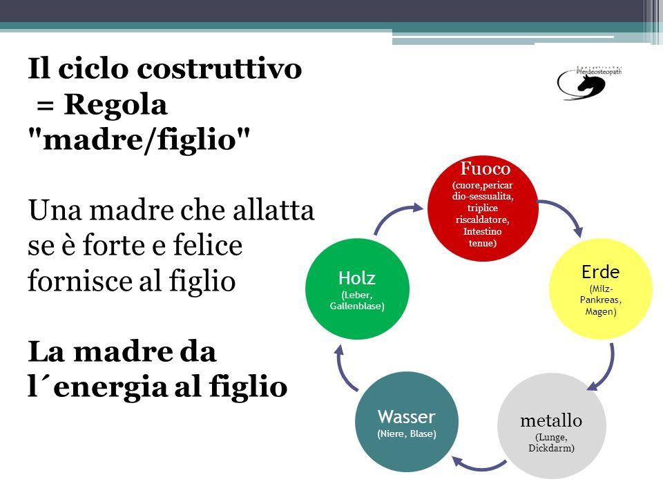 Il ciclo costruttivo = Regola