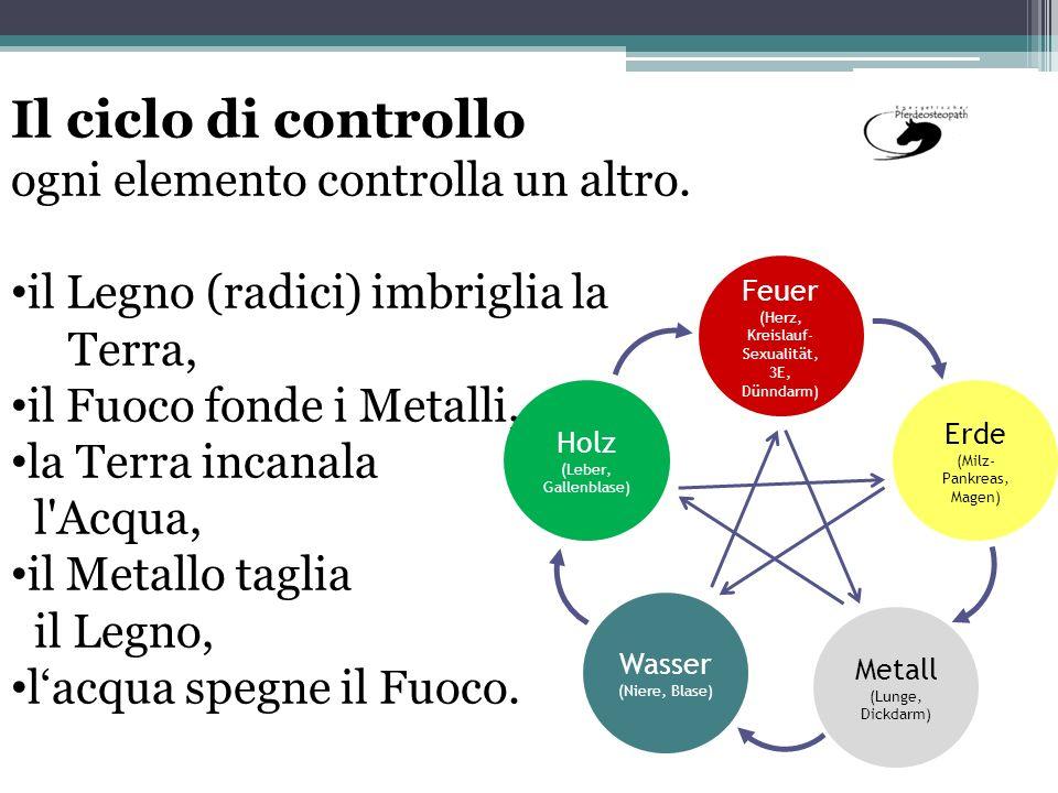 Il ciclo di controllo ogni elemento controlla un altro. il Legno (radici) imbriglia la Terra, il Fuoco fonde i Metalli, la Terra incanala l'Acqua, il