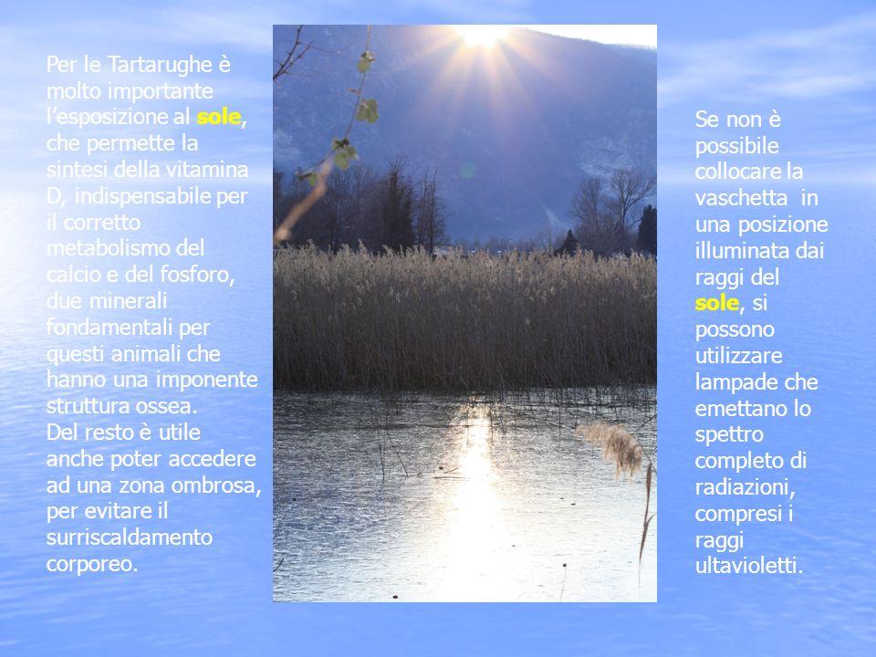 Per le Tartarughe è molto importante lesposizione al sole, che permette la sintesi della vitamina D, indispensabile per il corretto metabolismo del ca