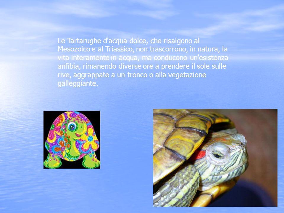 Le Tartarughe d'acqua dolce, che risalgono al Mesozoico e al Triassico, non trascorrono, in natura, la vita interamente in acqua, ma conducono un'esis