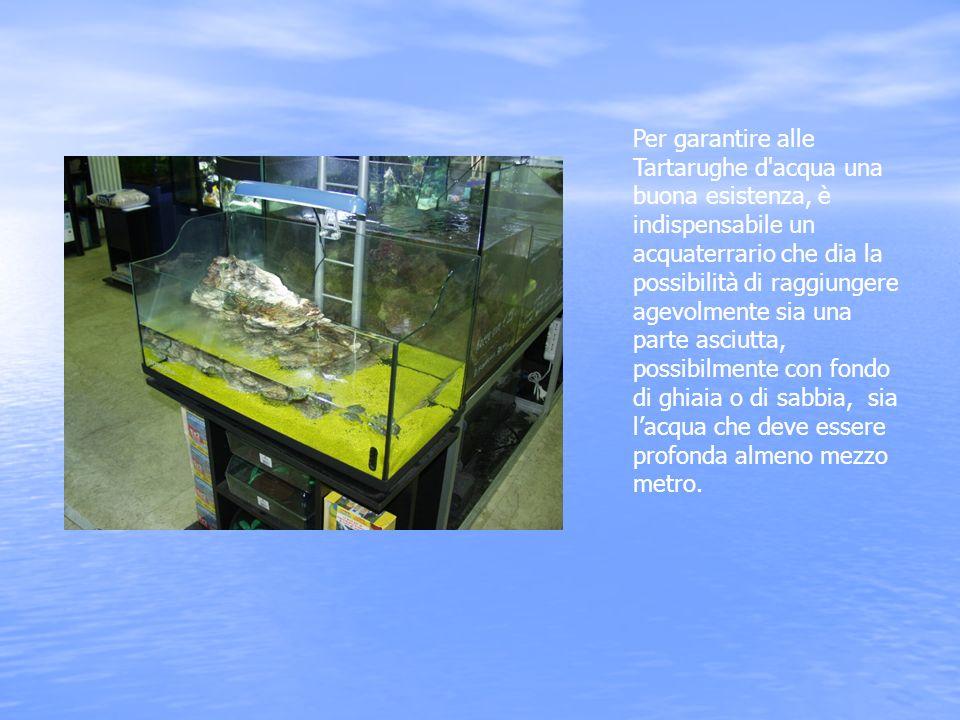 Per garantire alle Tartarughe d'acqua una buona esistenza, è indispensabile un acquaterrario che dia la possibilità di raggiungere agevolmente sia una