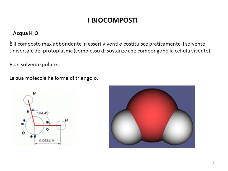 I BIOCOMPOSTI Acqua H 2 O È il composto max abbondante in esseri viventi e costituisce praticamente il solvente universale del protoplasma (complesso