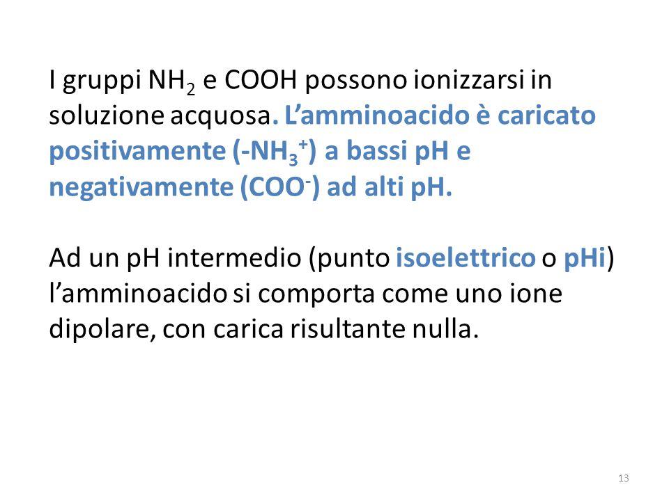 I gruppi NH 2 e COOH possono ionizzarsi in soluzione acquosa. Lamminoacido è caricato positivamente (-NH 3 + ) a bassi pH e negativamente (COO - ) ad