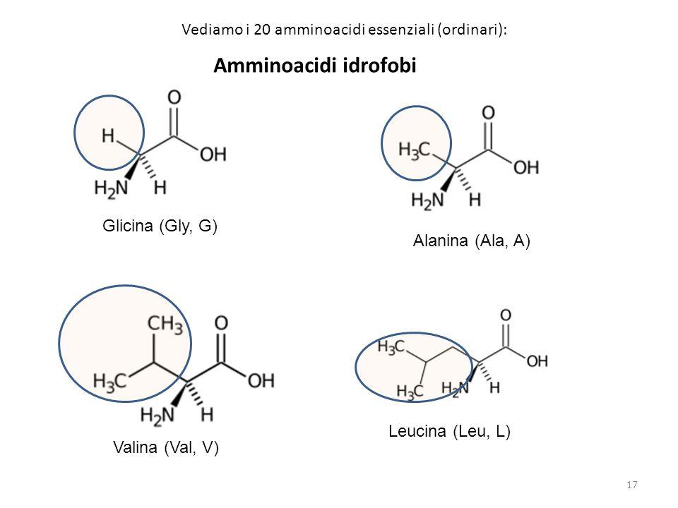 Amminoacidi idrofobi Glicina (Gly, G) Alanina (Ala, A) Valina (Val, V) Leucina (Leu, L) Vediamo i 20 amminoacidi essenziali (ordinari): 17