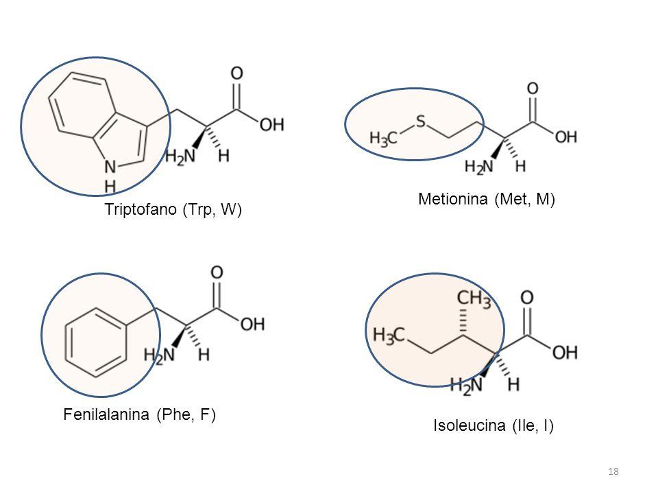 Triptofano (Trp, W) Metionina (Met, M) Isoleucina (Ile, I) Fenilalanina (Phe, F) 18