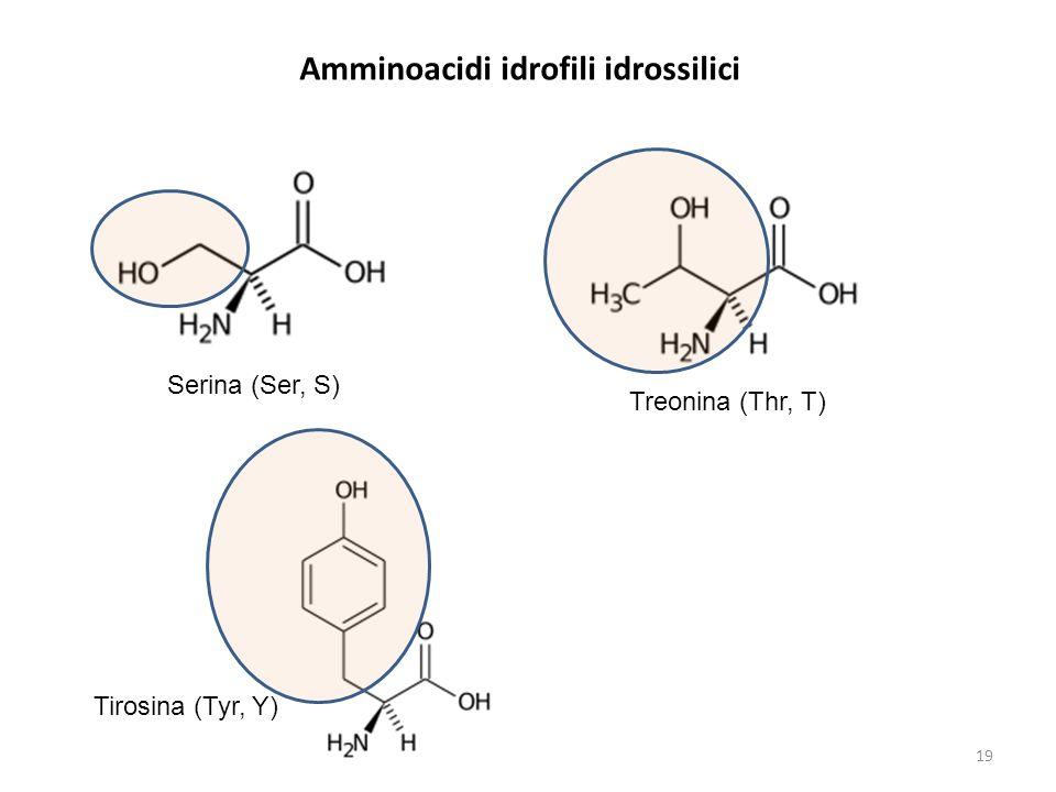 Amminoacidi idrofili idrossilici Serina (Ser, S) Treonina (Thr, T) Tirosina (Tyr, Y) 19