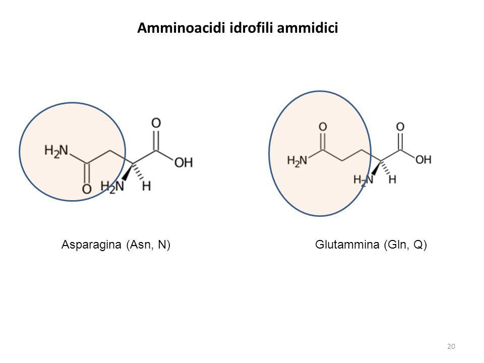 Amminoacidi idrofili ammidici Asparagina (Asn, N) Glutammina (Gln, Q) 20