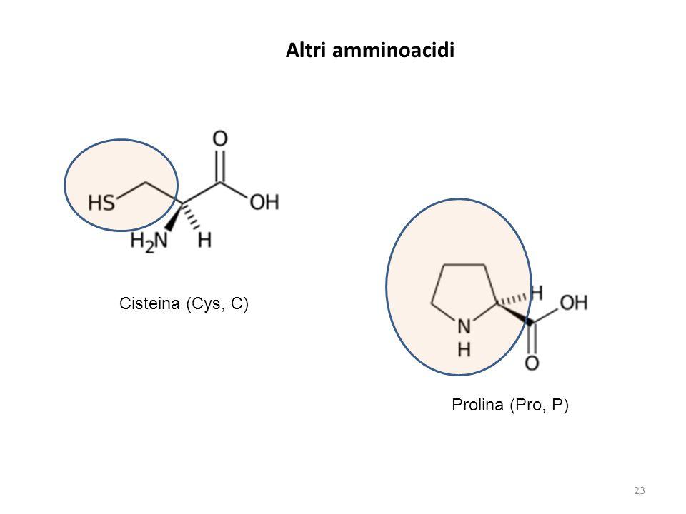 Altri amminoacidi Cisteina (Cys, C) Prolina (Pro, P) 23