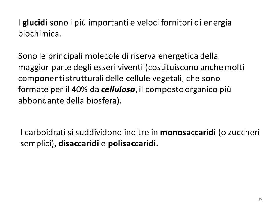 39 I glucidi sono i più importanti e veloci fornitori di energia biochimica. Sono le principali molecole di riserva energetica della maggior parte deg