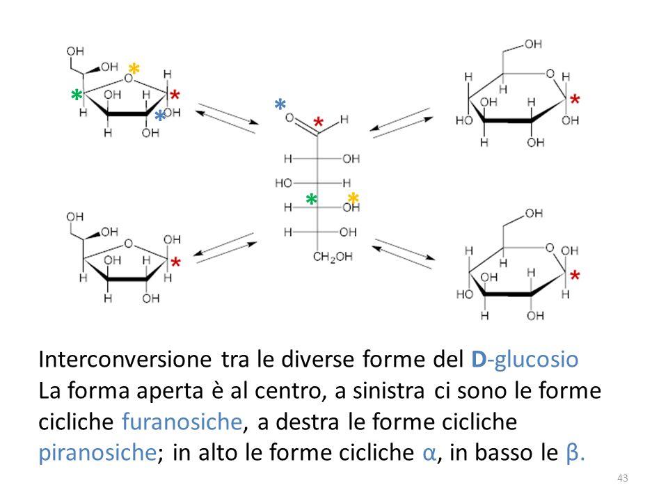 Interconversione tra le diverse forme del D-glucosio La forma aperta è al centro, a sinistra ci sono le forme cicliche furanosiche, a destra le forme