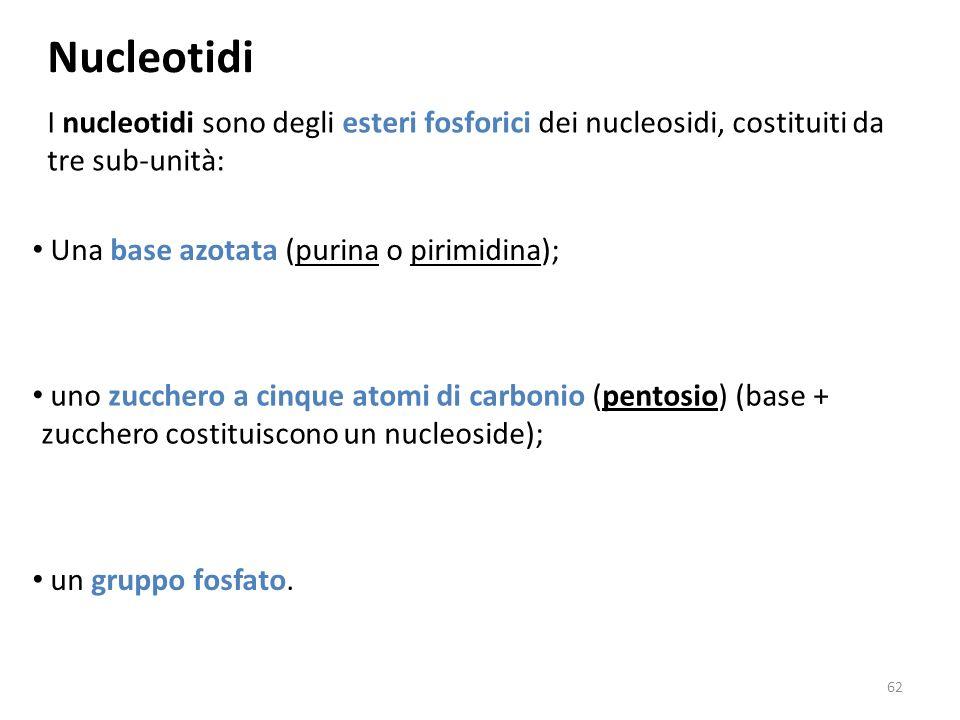Nucleotidi I nucleotidi sono degli esteri fosforici dei nucleosidi, costituiti da tre sub-unità: Una base azotata (purina o pirimidina); uno zucchero