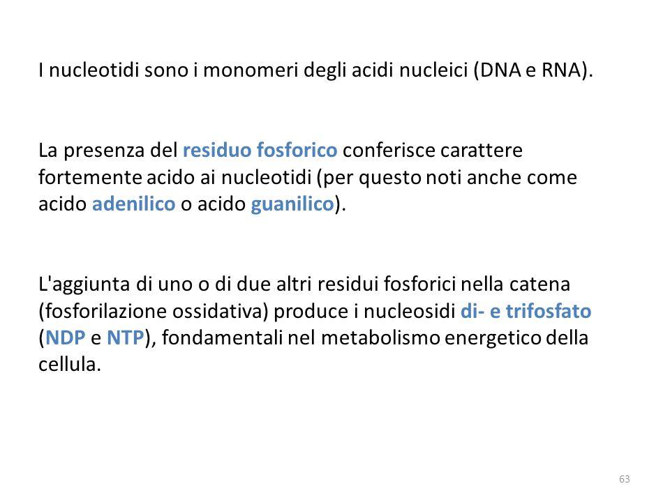I nucleotidi sono i monomeri degli acidi nucleici (DNA e RNA). La presenza del residuo fosforico conferisce carattere fortemente acido ai nucleotidi (