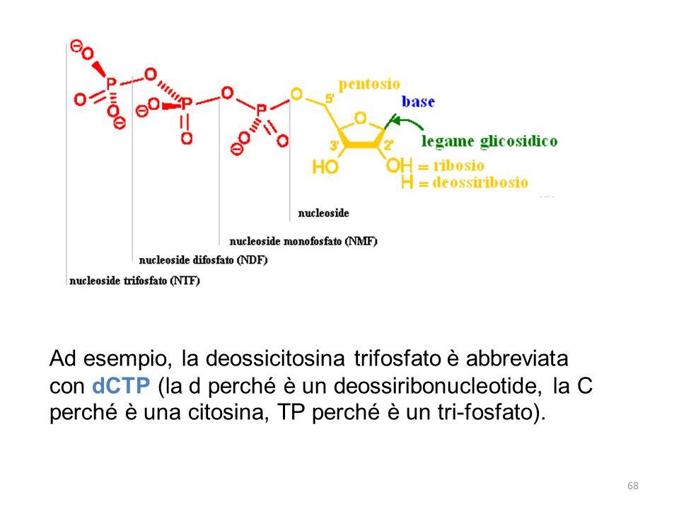 Ad esempio, la deossicitosina trifosfato è abbreviata con dCTP (la d perché è un deossiribonucleotide, la C perché è una citosina, TP perché è un tri-