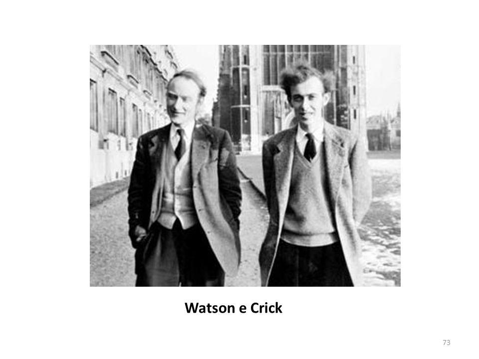 73 Watson e Crick