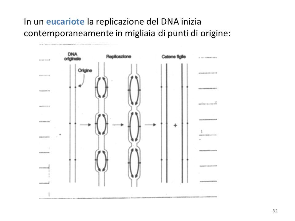 In un eucariote la replicazione del DNA inizia contemporaneamente in migliaia di punti di origine: 82