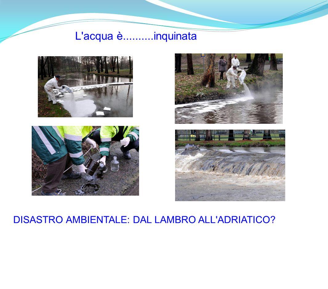 DISASTRO AMBIENTALE: DAL LAMBRO ALL'ADRIATICO? L'acqua è..........inquinata