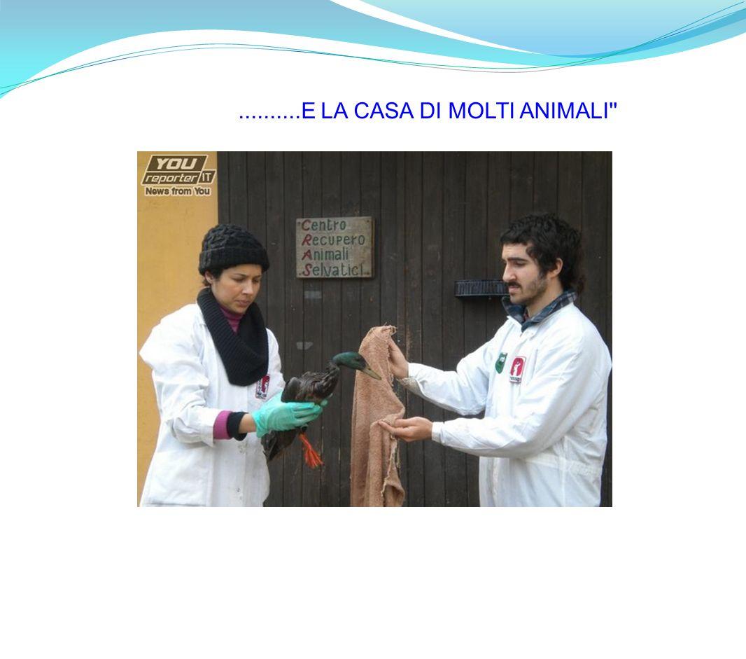 ..........E LA CASA DI MOLTI ANIMALI''