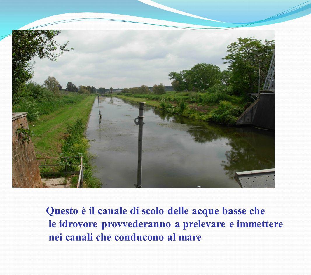 Questo è il canale di scolo delle acque basse che le idrovore provvederanno a prelevare e immettere nei canali che conducono al mare